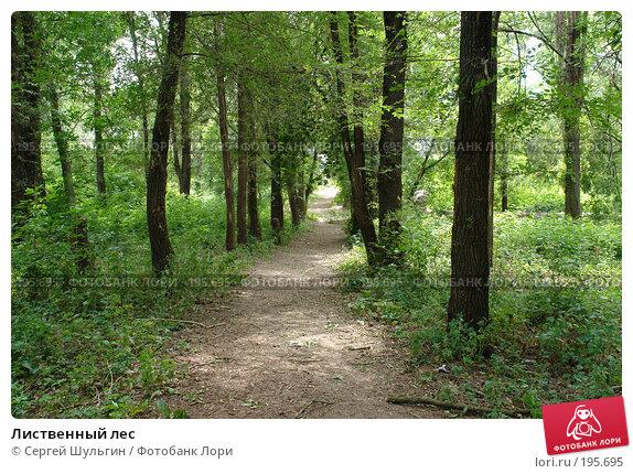 Лиственный лес, фото № 195695, снято 9 июля 2007 г. (c) Сергей Шульгин / Фотобанк Лори