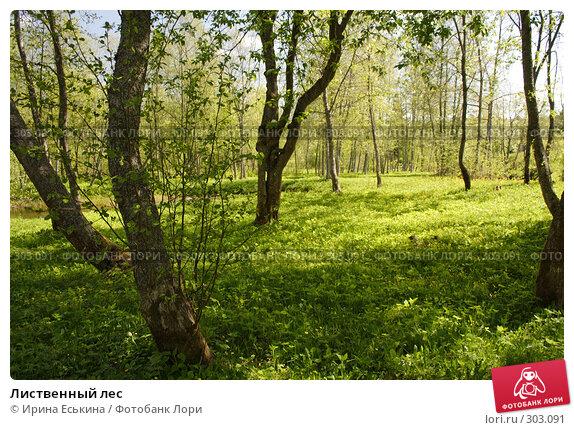 Купить «Лиственный лес», фото № 303091, снято 25 мая 2008 г. (c) Ирина Еськина / Фотобанк Лори