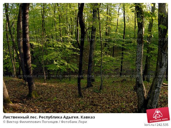 Купить «Лиственный лес. Республика Адыгея. Кавказ», фото № 242535, снято 29 апреля 2006 г. (c) Виктор Филиппович Погонцев / Фотобанк Лори