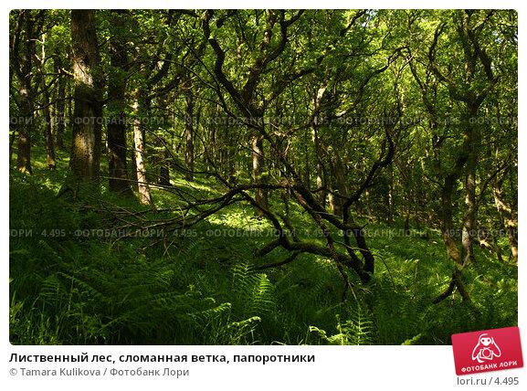 Лиственный лес, сломанная ветка, папоротники, фото № 4495, снято 5 июня 2006 г. (c) Tamara Kulikova / Фотобанк Лори