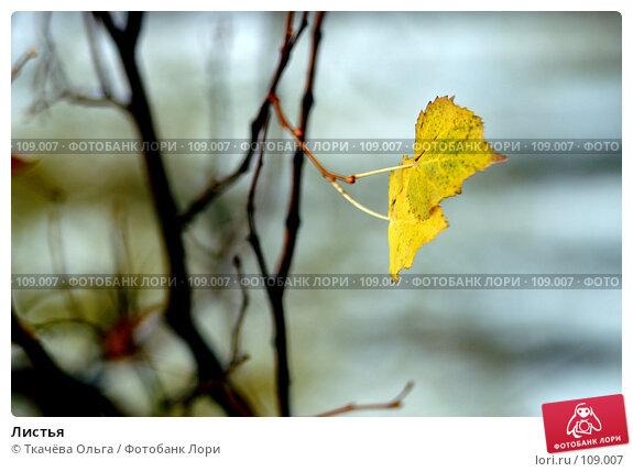 Листья, фото № 109007, снято 19 октября 2007 г. (c) Ткачёва Ольга / Фотобанк Лори