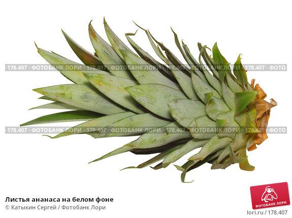 Листья ананаса на белом фоне, фото № 178407, снято 30 декабря 2007 г. (c) Катыкин Сергей / Фотобанк Лори