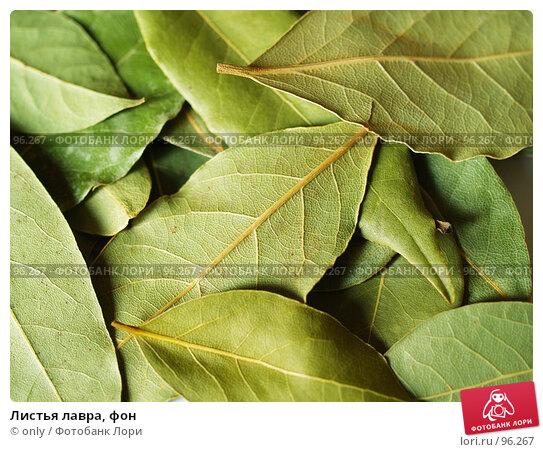 Купить «Листья лавра, фон», фото № 96267, снято 5 апреля 2007 г. (c) only / Фотобанк Лори