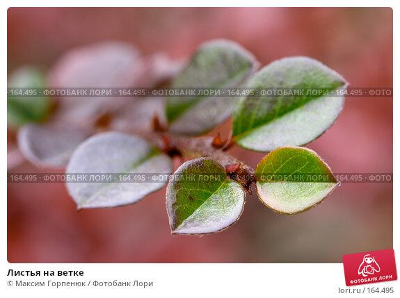 Купить «Листья на ветке», фото № 164495, снято 28 ноября 2006 г. (c) Максим Горпенюк / Фотобанк Лори