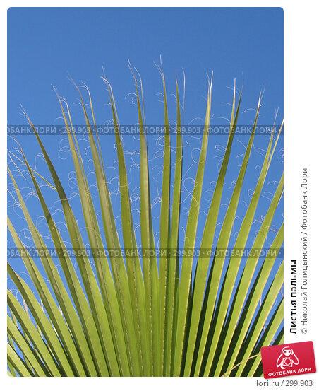 Листья пальмы, фото № 299903, снято 7 марта 2007 г. (c) Николай Голицынский / Фотобанк Лори