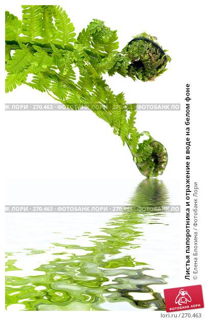 Листья папоротника и отражение в воде на белом фоне, фото № 270463, снято 23 мая 2017 г. (c) Елена Блохина / Фотобанк Лори