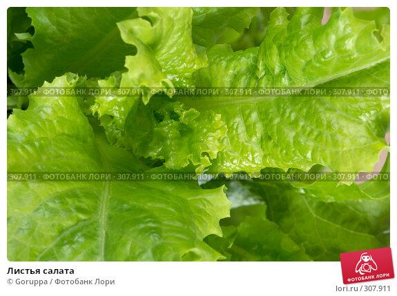Листья салата, фото № 307911, снято 31 мая 2008 г. (c) Goruppa / Фотобанк Лори