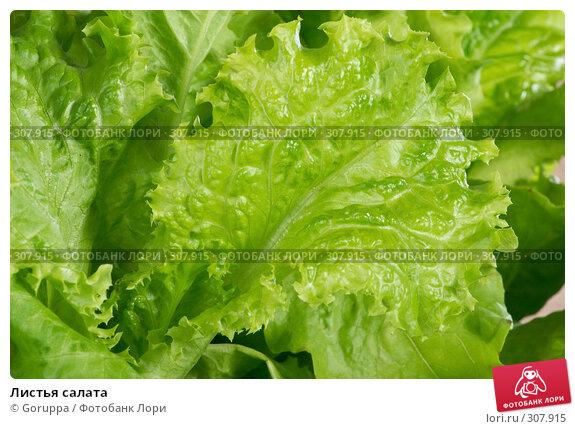 Листья салата, фото № 307915, снято 31 мая 2008 г. (c) Goruppa / Фотобанк Лори