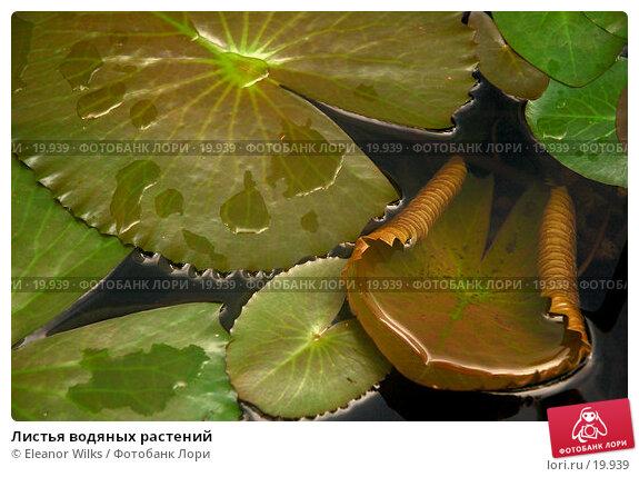 Листья водяных растений, фото № 19939, снято 20 марта 2007 г. (c) Eleanor Wilks / Фотобанк Лори