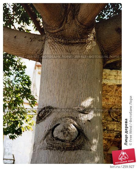 Лицо дерева, эксклюзивное фото № 259927, снято 24 сентября 2017 г. (c) Free Wind / Фотобанк Лори