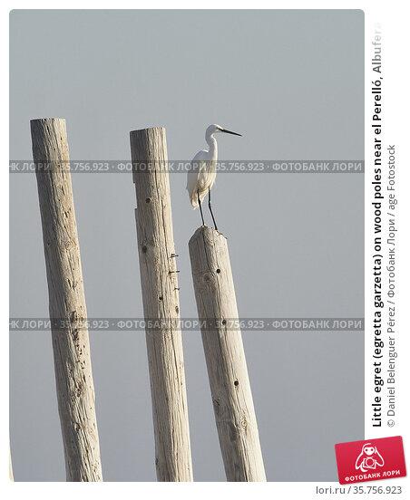Little egret (egretta garzetta) on wood poles near el Perelló, Albufera... Стоковое фото, фотограф Daniel Belenguer Pérez / age Fotostock / Фотобанк Лори
