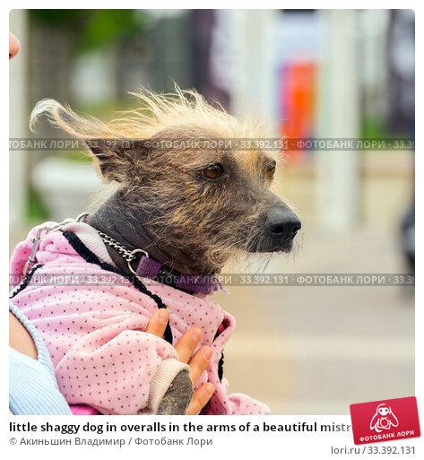 Купить «little shaggy dog in overalls in the arms of a beautiful mistress», фото № 33392131, снято 18 мая 2019 г. (c) Акиньшин Владимир / Фотобанк Лори
