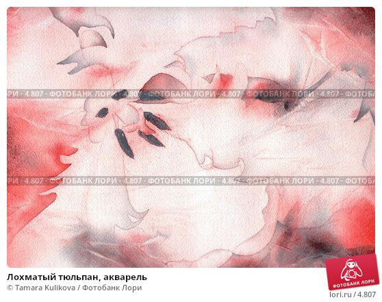 Купить «Лохматый тюльпан, акварель», иллюстрация № 4807 (c) Tamara Kulikova / Фотобанк Лори