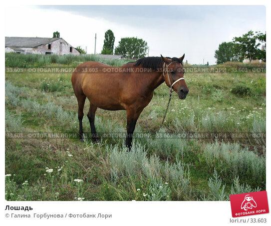 Лошадь, фото № 33603, снято 8 июля 2005 г. (c) Галина  Горбунова / Фотобанк Лори