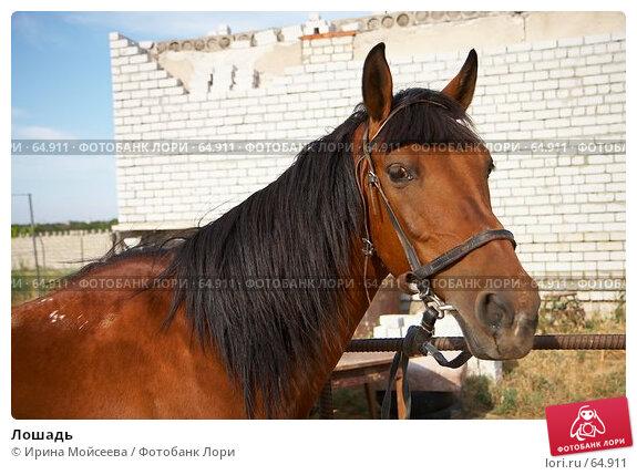 Лошадь, эксклюзивное фото № 64911, снято 17 июня 2007 г. (c) Ирина Мойсеева / Фотобанк Лори