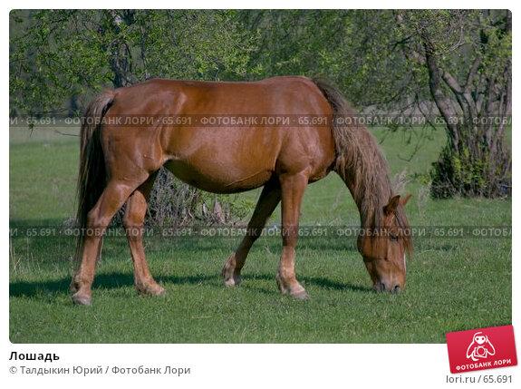Лошадь, фото № 65691, снято 24 июля 2017 г. (c) Талдыкин Юрий / Фотобанк Лори