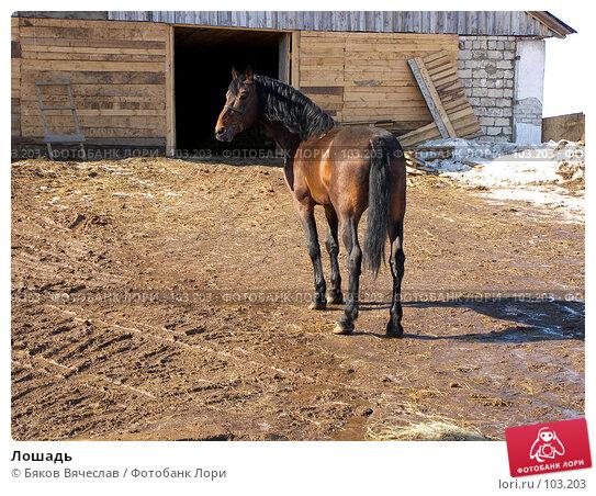 Лошадь, фото № 103203, снято 10 декабря 2016 г. (c) Бяков Вячеслав / Фотобанк Лори