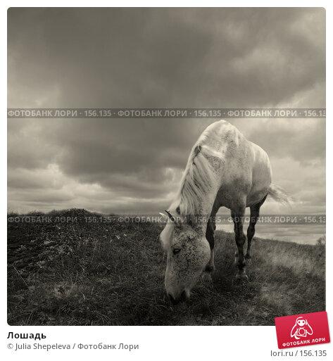 Купить «Лошадь», фото № 156135, снято 23 апреля 2018 г. (c) Julia Shepeleva / Фотобанк Лори