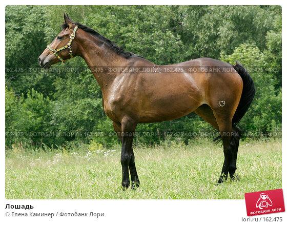 Лошадь, фото № 162475, снято 1 июля 2007 г. (c) Елена Каминер / Фотобанк Лори