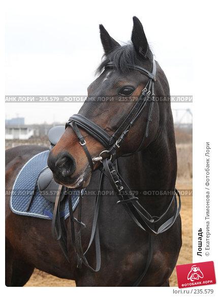 Купить «Лошадь», фото № 235579, снято 12 марта 2007 г. (c) Екатерина Тимонова / Фотобанк Лори