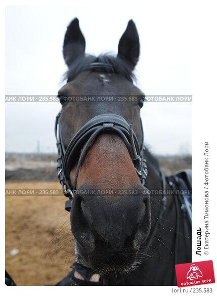 Купить «Лошадь», фото № 235583, снято 12 марта 2007 г. (c) Екатерина Тимонова / Фотобанк Лори
