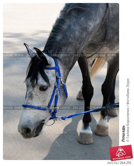 Лошадь, фото № 264255, снято 12 апреля 2008 г. (c) Галина Короленко / Фотобанк Лори