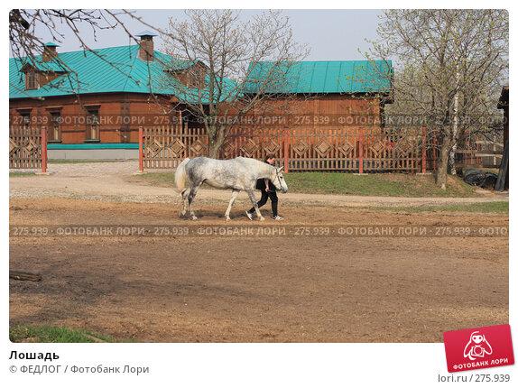 Купить «Лошадь», фото № 275939, снято 12 апреля 2008 г. (c) ФЕДЛОГ.РФ / Фотобанк Лори