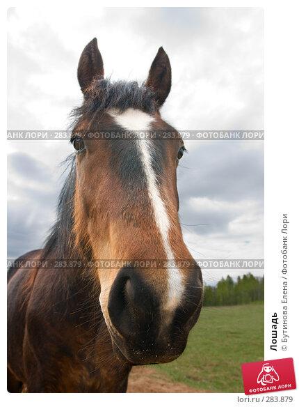 Лошадь, фото № 283879, снято 10 мая 2008 г. (c) Бутинова Елена / Фотобанк Лори