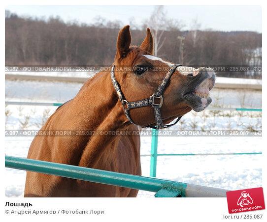 Лошадь, фото № 285087, снято 24 марта 2006 г. (c) Андрей Армягов / Фотобанк Лори