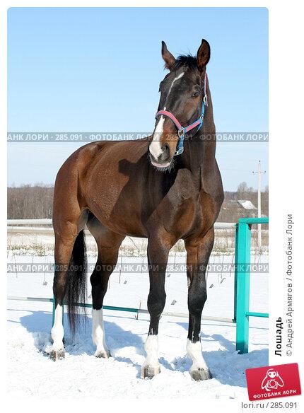 Купить «Лошадь», фото № 285091, снято 24 марта 2006 г. (c) Андрей Армягов / Фотобанк Лори