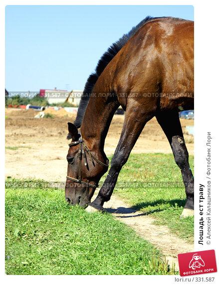 Лошадь ест траву, фото № 331587, снято 11 августа 2007 г. (c) Алексей Калашников / Фотобанк Лори
