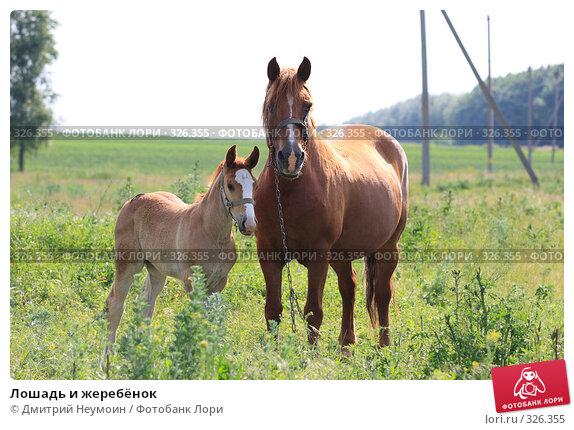 Лошадь и жеребёнок, эксклюзивное фото № 326355, снято 12 июня 2008 г. (c) Дмитрий Неумоин / Фотобанк Лори