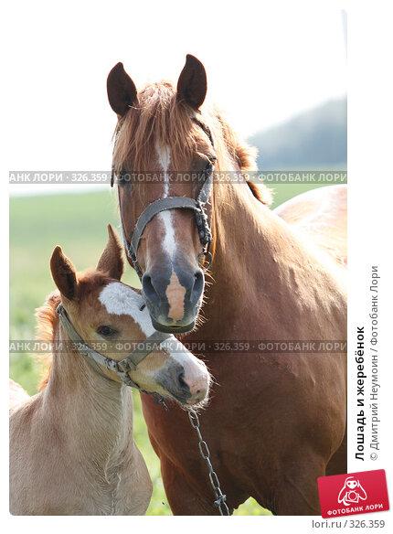 Лошадь и жеребёнок, эксклюзивное фото № 326359, снято 12 июня 2008 г. (c) Дмитрий Неумоин / Фотобанк Лори