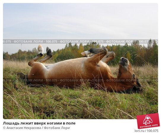 Лошадь лежит вверх ногами в поле, фото № 100075, снято 26 сентября 2007 г. (c) Анастасия Некрасова / Фотобанк Лори