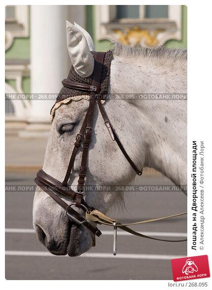 Купить «Лошадь на Дворцовой площади», эксклюзивное фото № 268095, снято 29 апреля 2008 г. (c) Александр Алексеев / Фотобанк Лори