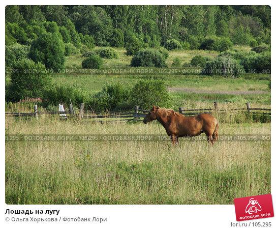 Лошадь на лугу, фото № 105295, снято 28 апреля 2017 г. (c) Ольга Хорькова / Фотобанк Лори