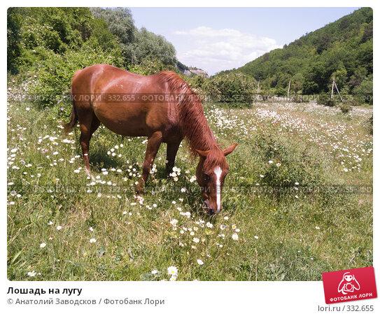 Лошадь на лугу, фото № 332655, снято 6 июня 2008 г. (c) Анатолий Заводсков / Фотобанк Лори