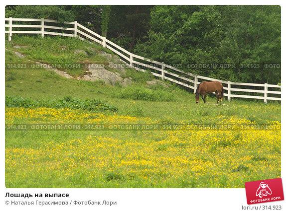 Лошадь на выпасе, фото № 314923, снято 6 июня 2008 г. (c) Наталья Герасимова / Фотобанк Лори