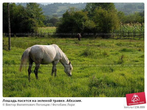 Лошадь пасется на зеленой травке. Абхазия., фото № 236899, снято 28 августа 2006 г. (c) Виктор Филиппович Погонцев / Фотобанк Лори