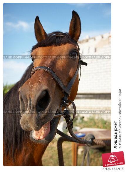 Купить «Лошадь ржет», эксклюзивное фото № 64915, снято 17 июня 2007 г. (c) Ирина Мойсеева / Фотобанк Лори