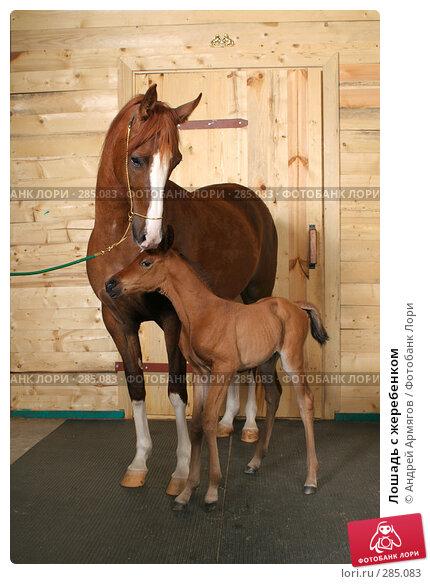 Лошадь с жеребенком, фото № 285083, снято 24 марта 2006 г. (c) Андрей Армягов / Фотобанк Лори