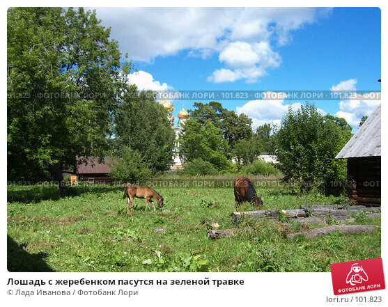 Лошадь с жеребенком пасутся на зеленой травке, фото № 101823, снято 21 июля 2006 г. (c) Лада Иванова / Фотобанк Лори