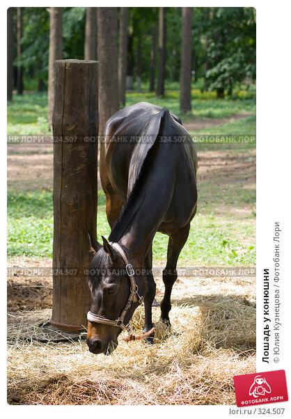 Лошадь у конюшни, фото № 324507, снято 15 июня 2008 г. (c) Юлия Кузнецова / Фотобанк Лори