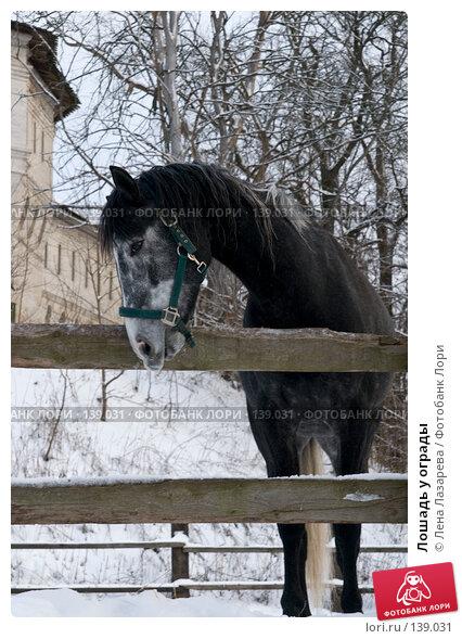 Лошадь у ограды, фото № 139031, снято 1 декабря 2007 г. (c) Лена Лазарева / Фотобанк Лори