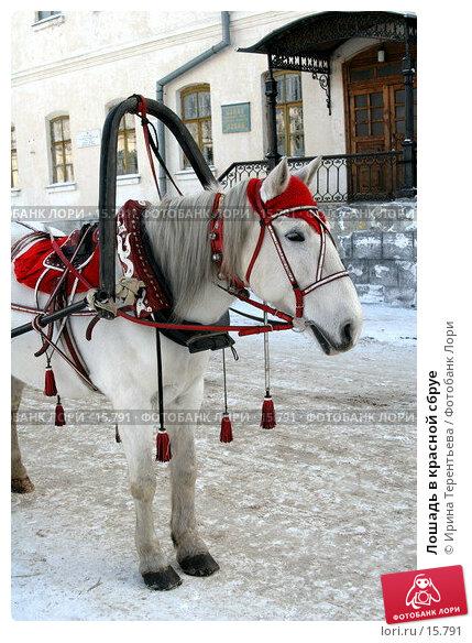 Лошадь в красной сбруе, эксклюзивное фото № 15791, снято 6 ноября 2006 г. (c) Ирина Терентьева / Фотобанк Лори