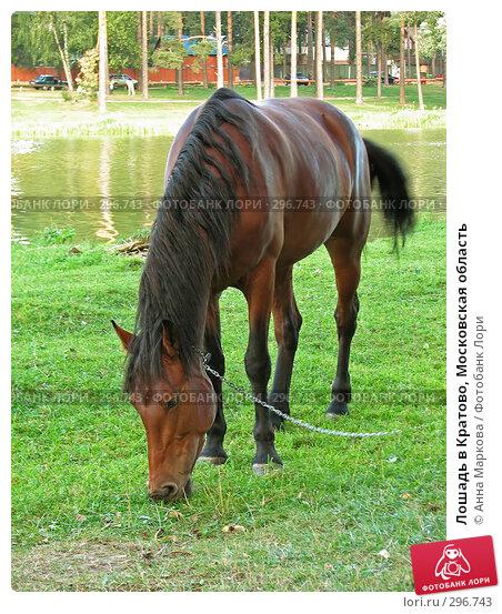 Лошадь в Кратово, Московская область, фото № 296743, снято 26 августа 2007 г. (c) Анна Маркова / Фотобанк Лори