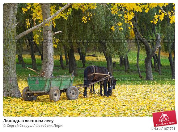 Лошадь в осеннем лесу, фото № 107791, снято 28 октября 2007 г. (c) Сергей Старуш / Фотобанк Лори