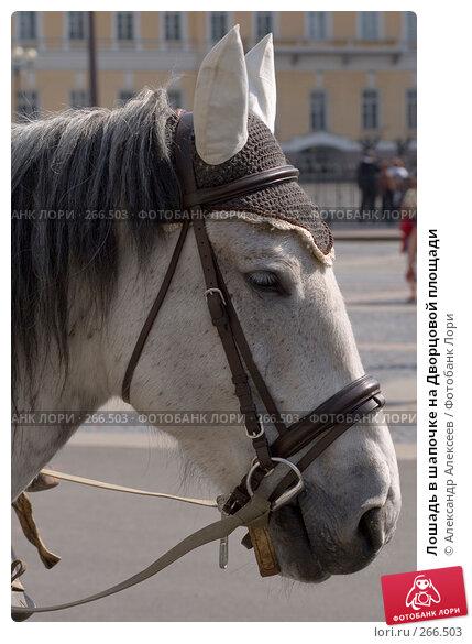 Лошадь в шапочке на Дворцовой площади, эксклюзивное фото № 266503, снято 29 апреля 2008 г. (c) Александр Алексеев / Фотобанк Лори