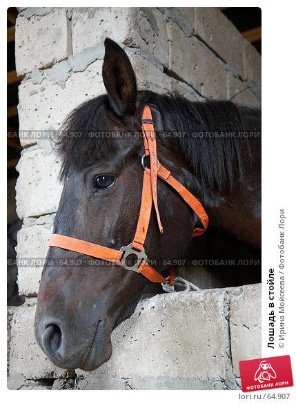 Лошадь в стойле, эксклюзивное фото № 64907, снято 17 июня 2007 г. (c) Ирина Мойсеева / Фотобанк Лори