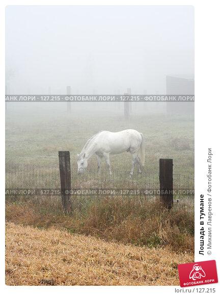 Лошадь в тумане, фото № 127215, снято 7 октября 2005 г. (c) Михаил Лавренов / Фотобанк Лори